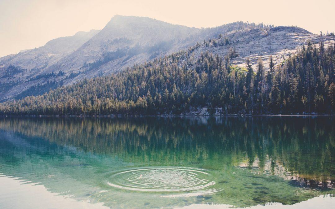 Biologiczne oczyszczalnie ścieków – co należy o nich wiedzieć