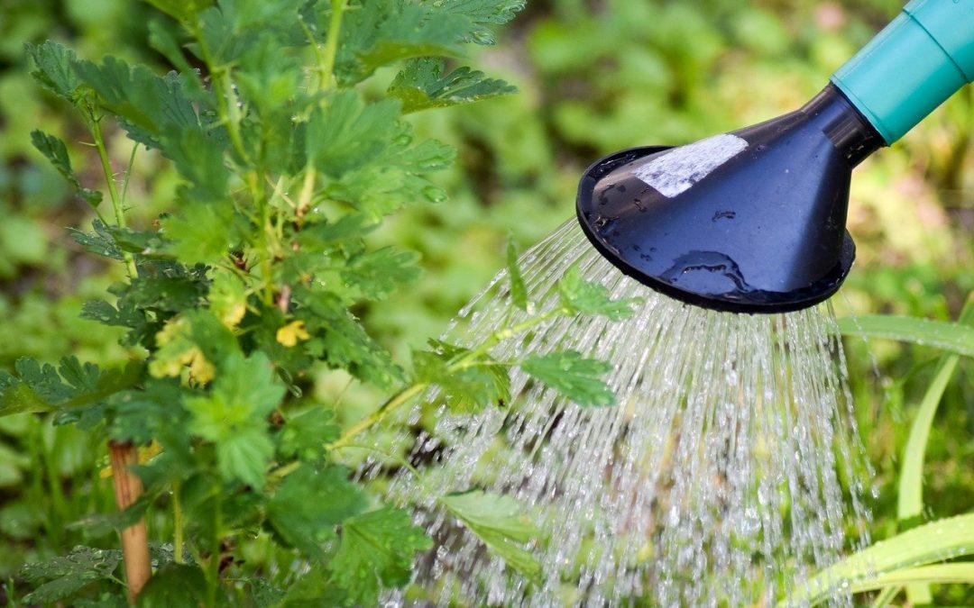 """Program """"Moja woda"""" – warunki, dofinansowanie, formalności"""