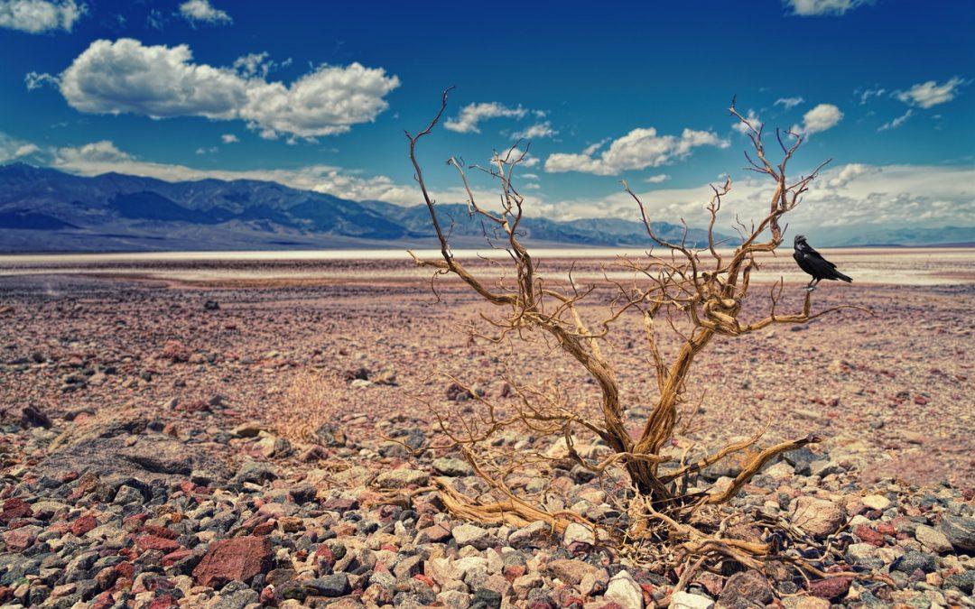 Czy nowa specustawa pomoże w walce z suszą?
