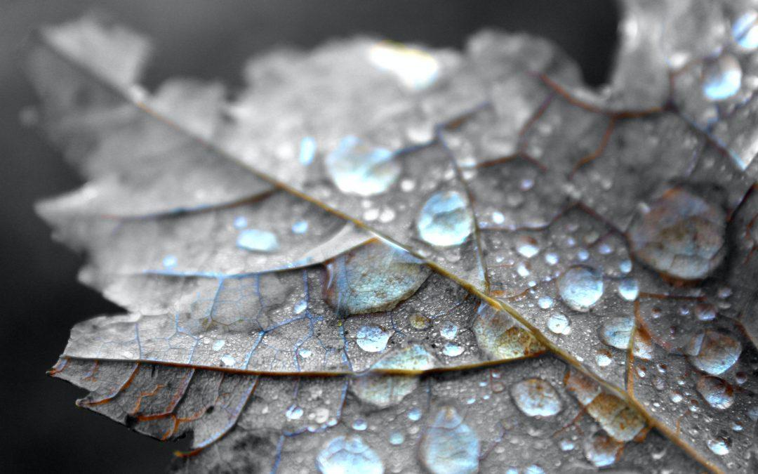 Jak miasta wspierają łapanie deszczówki? Dofinansowania na małą retencję – Toruń, Łódź oraz województwo śląskie