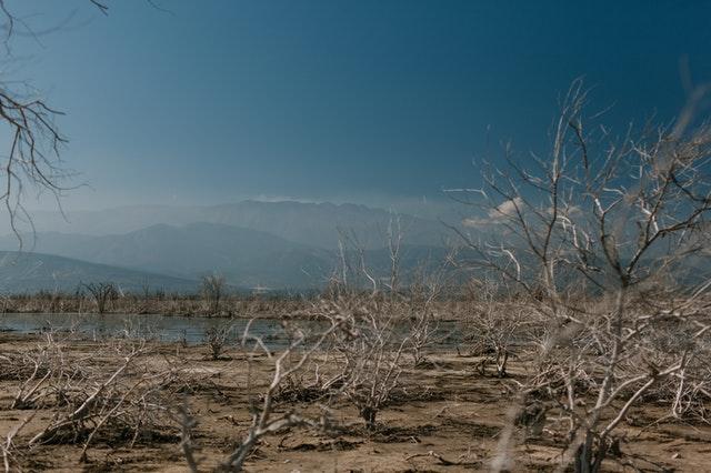 Innowacje ze świata – jak dane pomagają Indiom pokonywać kryzysy suszy