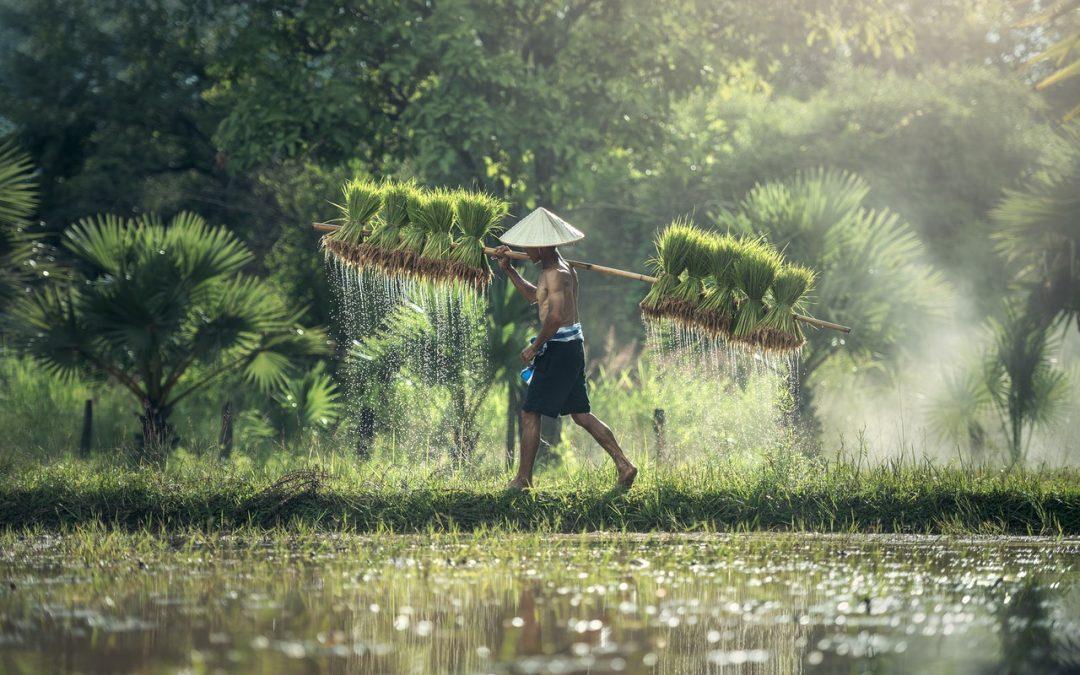 Innowacje ze świata – zrównoważony rozwój gospodarki wodnej w Azji
