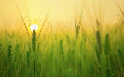 Polskie rolnictwo potrzebuje małej i średniej retencji!